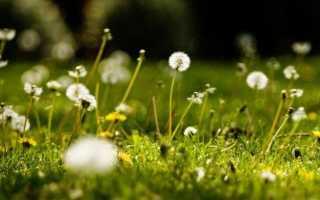 Аллергия на луговые травы лечение
