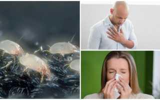 Аллергия пылевых клещей лечение