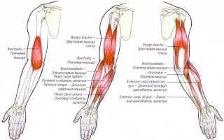 Растяжение мышц руки лечение народными средствами