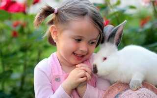 Аллергия у кроликов лечение