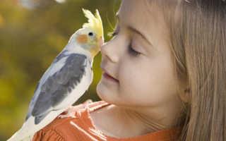 Проявляется аллергия на попугаев детей