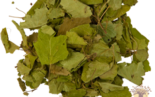 Листья березы лечебные свойства и противопоказания отзывы