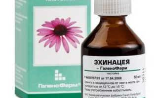 Эхинацея лечебные свойства и противопоказания цена