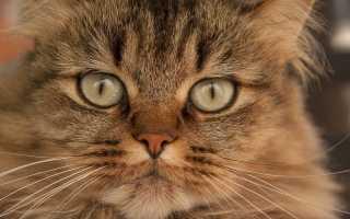 Какие антибиотики можно колоть кошкам
