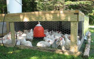 Народные методы лечения цыплят